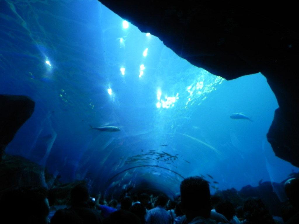 Il Tunnel dell'Oceano...