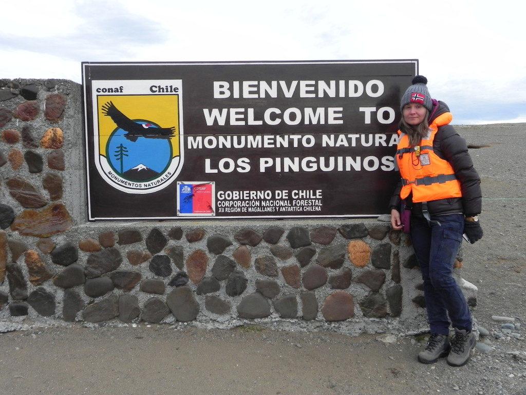 Isla Magdalena, Cile... l'isola dei Pinguini Magellanici...