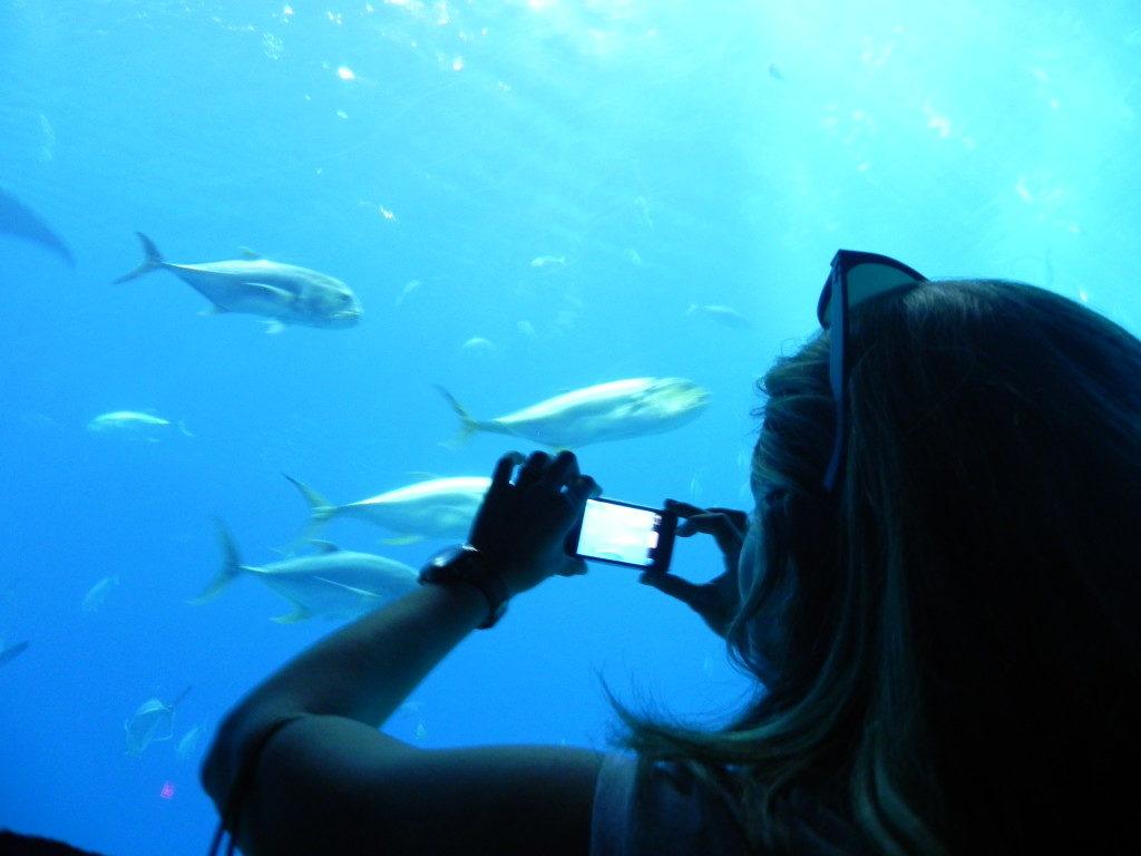 Cosa vedere ad Atlanta: Georgia Aquarium, il Tunnel dell'Oceano