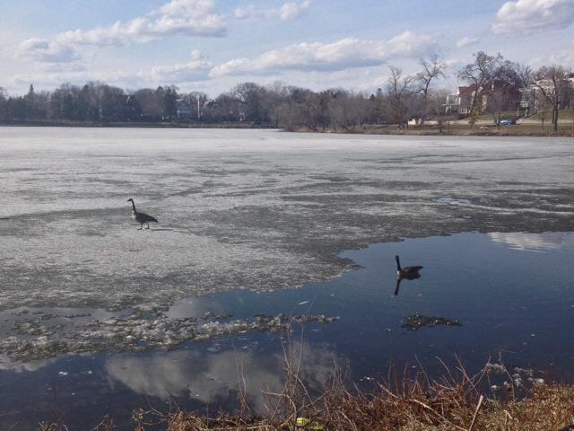 Uno degli splendidi scorci dei 10000 laghi del Minnesota
