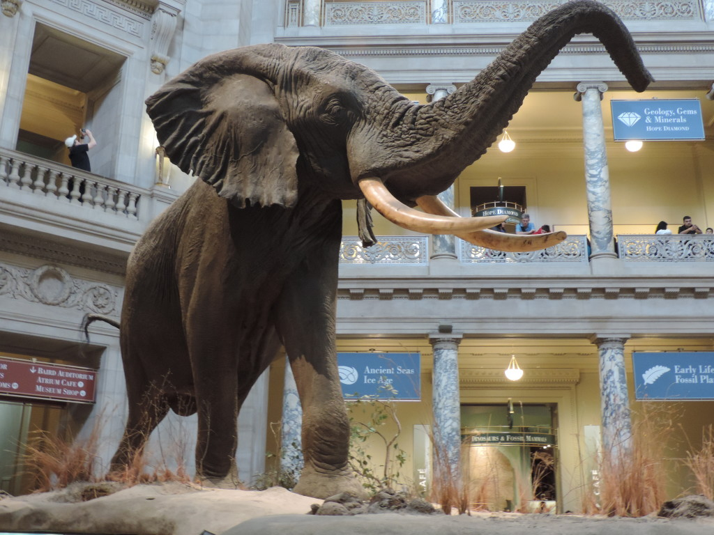national Museum of Natural History, l'interno