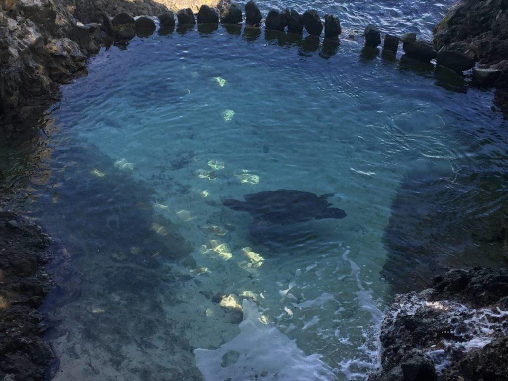 Cosa vedere a St. Thomas: tartarughe marine