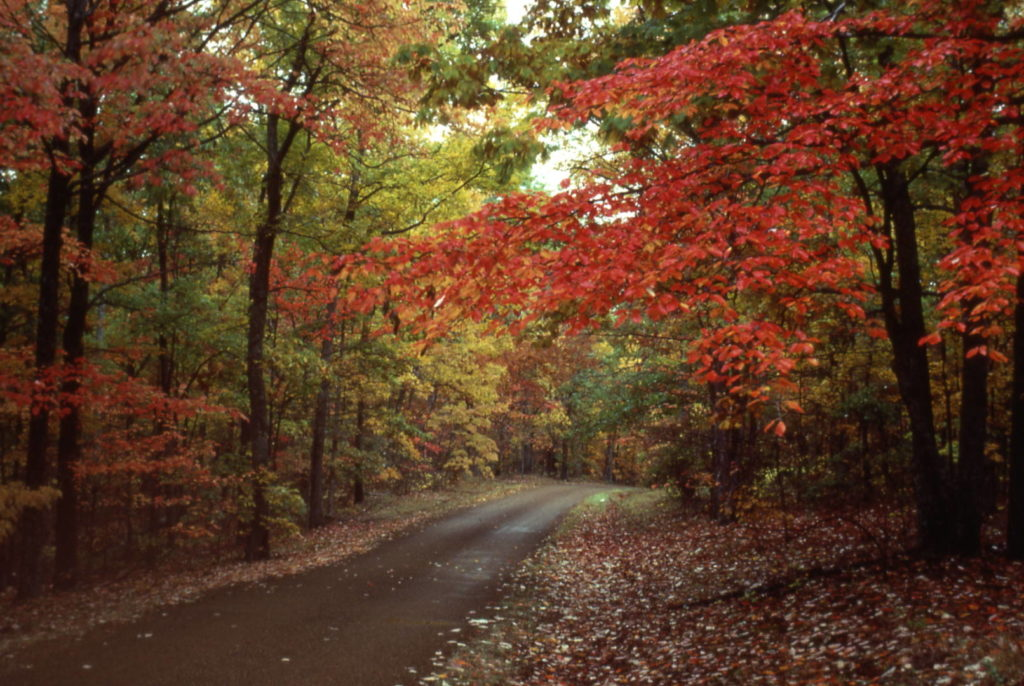 Things to do in Mississippi: the season of foliage on the Natchez Trace Pkwy (nps.org ph. credits)