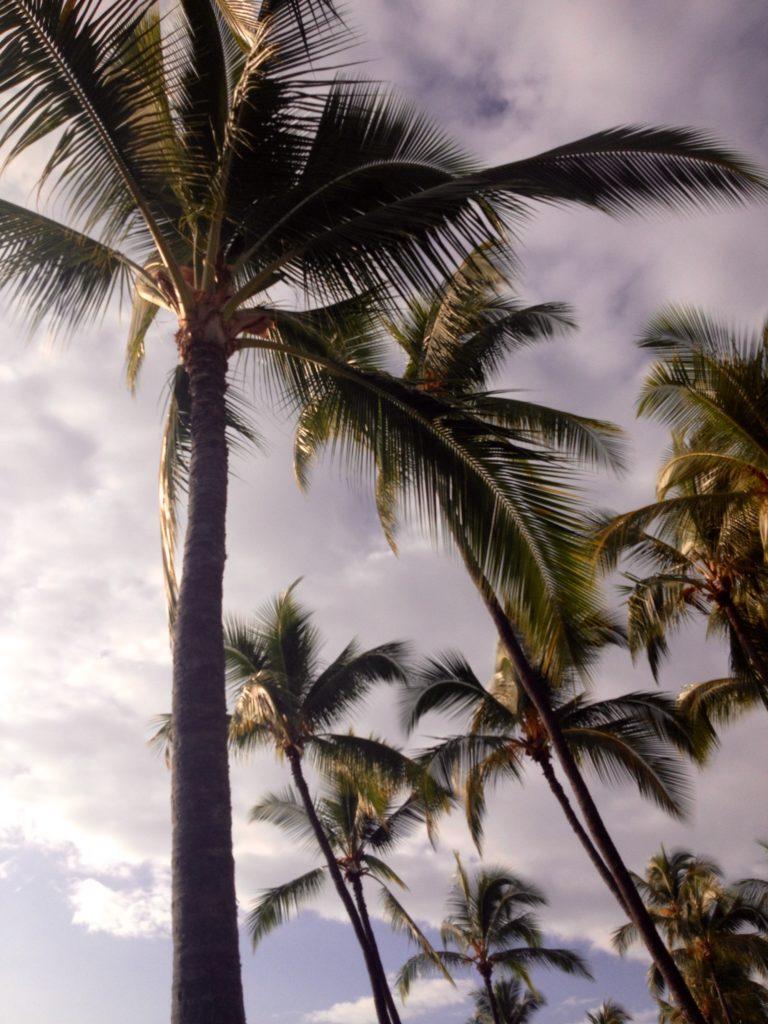 Frammenti di Hawaii