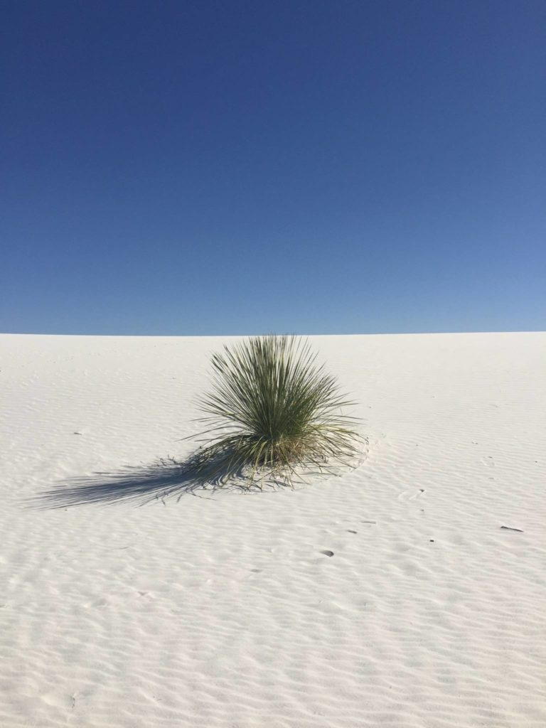 White Sands National Park, yucca