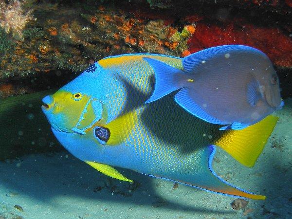 Discover the Florida Keys: snorkelling at John Pennekamp Coral Reef State Park