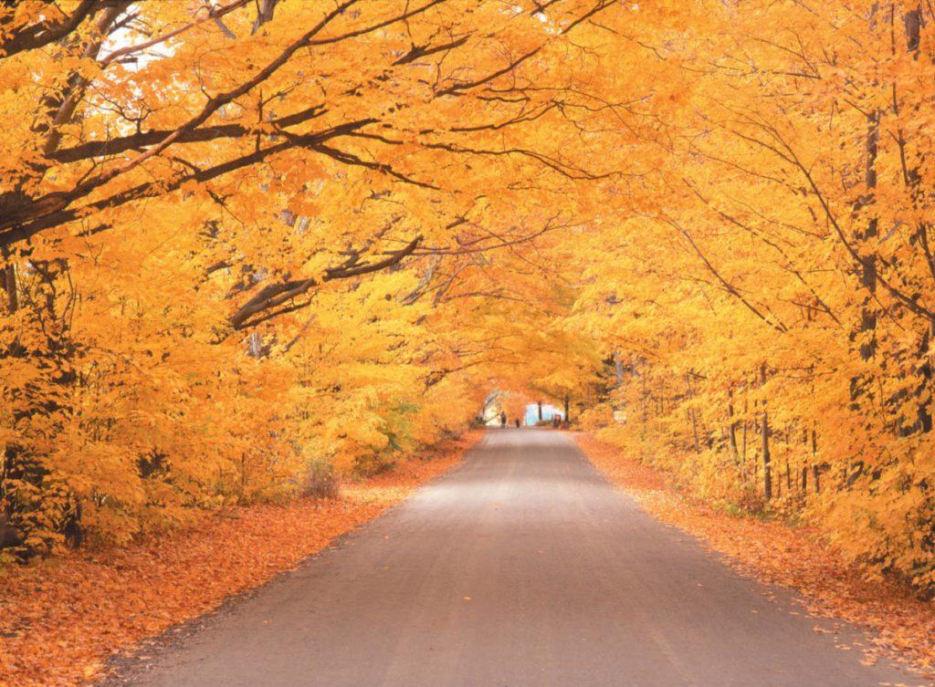 Viaggiare da soli negli USA: foliage in New England
