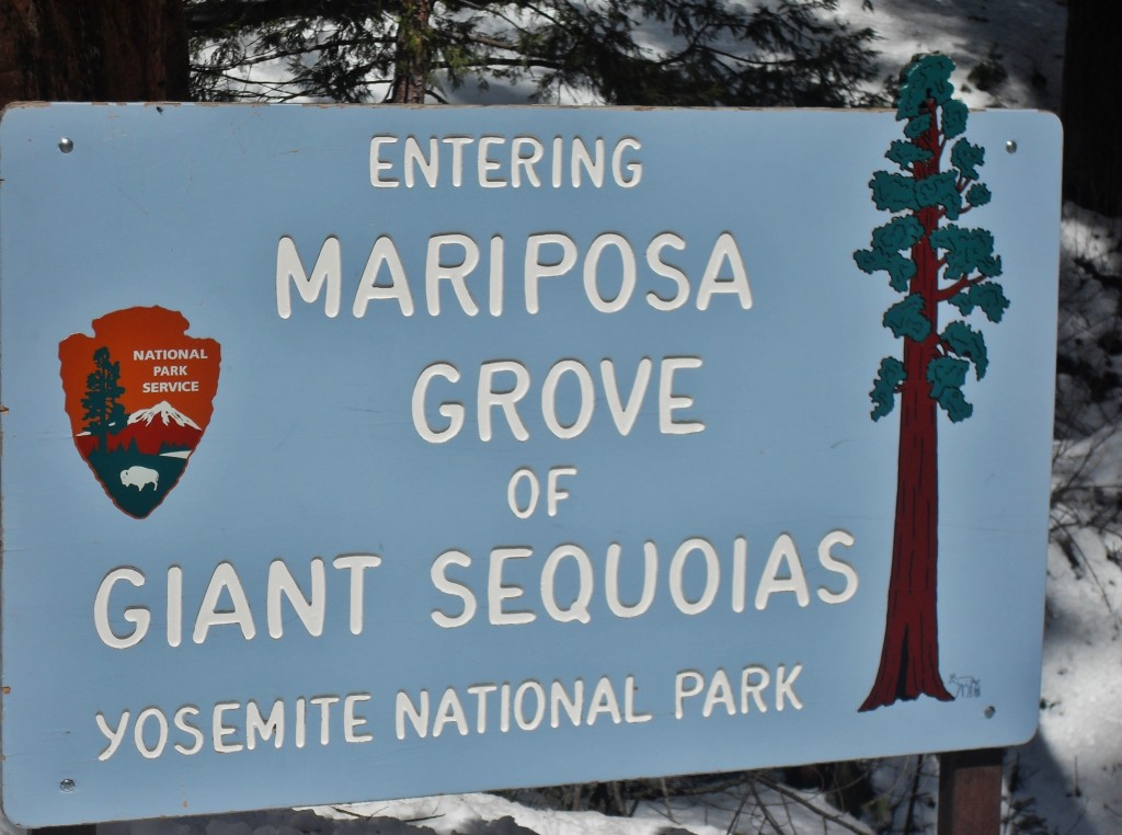 Benvenuti a Mariposa Grove e Giant Sequoias