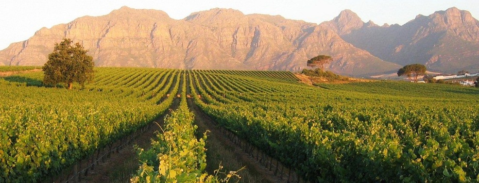 Winelands, Sud Africa (southafricandreams.it)