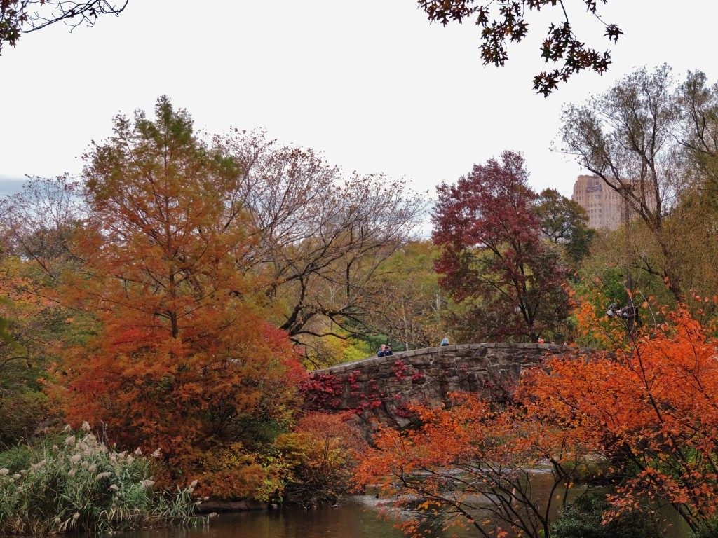 Central Park, the foliage