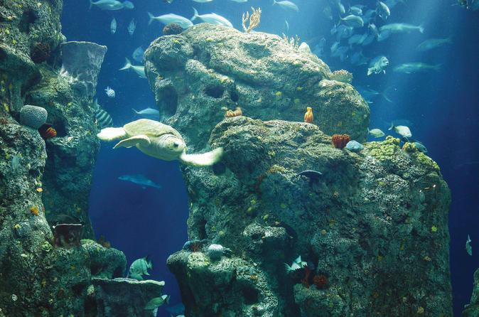 South Carolina Aquarium, Charleston