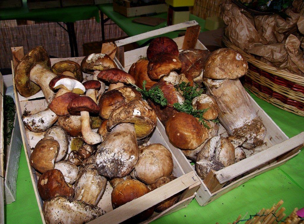 Cassette di Funghi Porcini in vendita a San Sisto