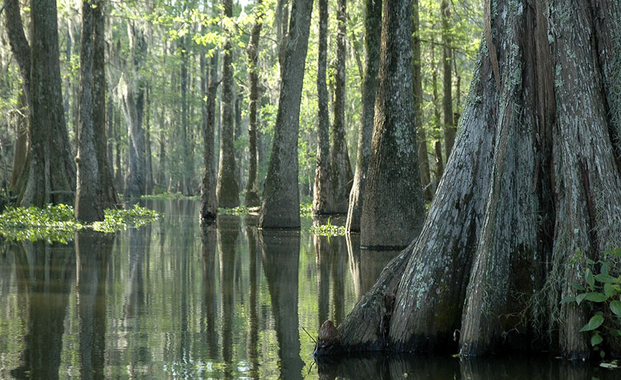 What to see in Louisiana: bayou of the Atchafalaya Basin