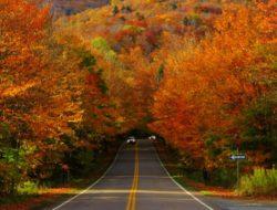 Foliage in Vermont