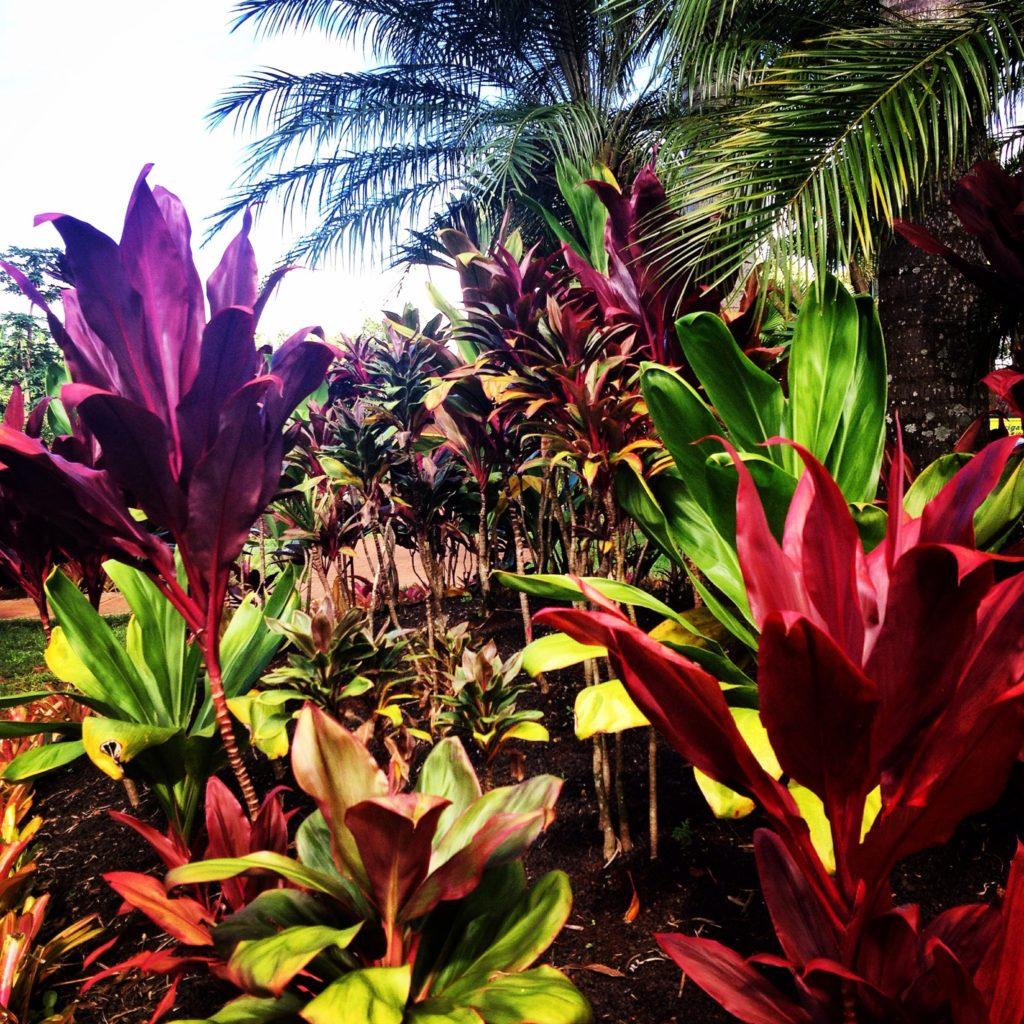 Hawaii, emozioni a colori