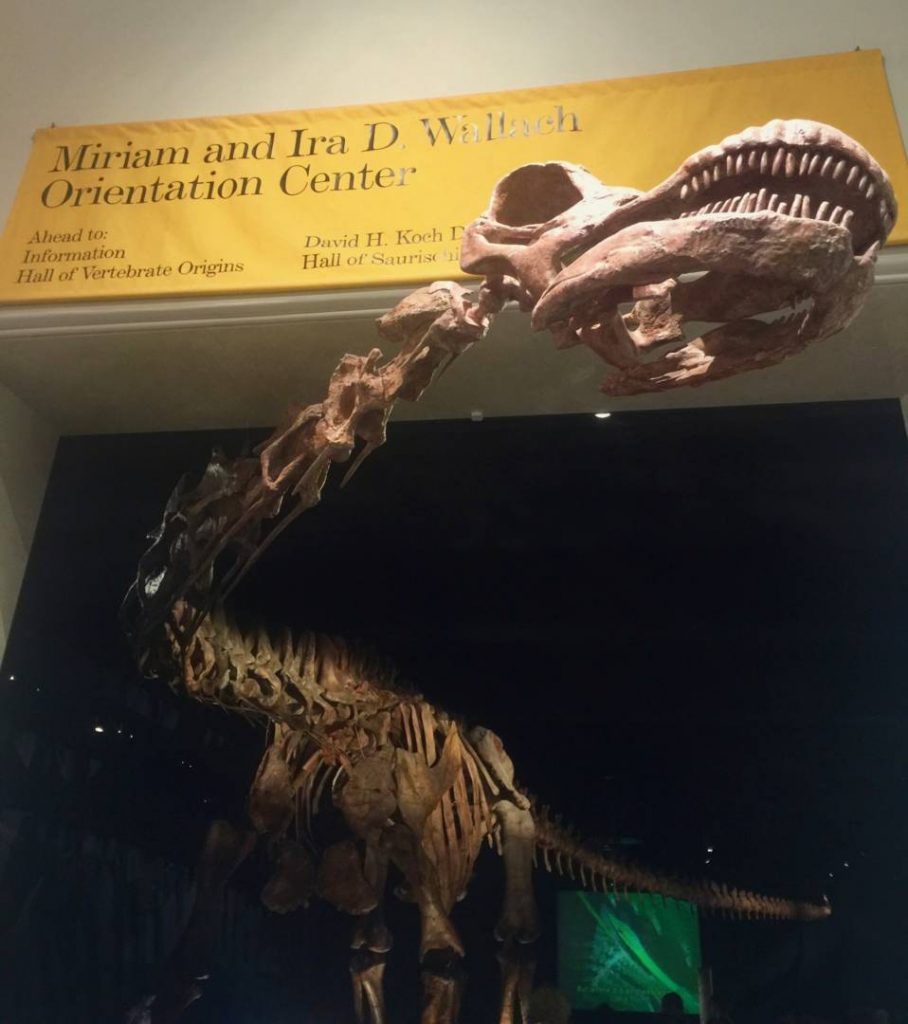 Museums in New York: American Museum of Natural History