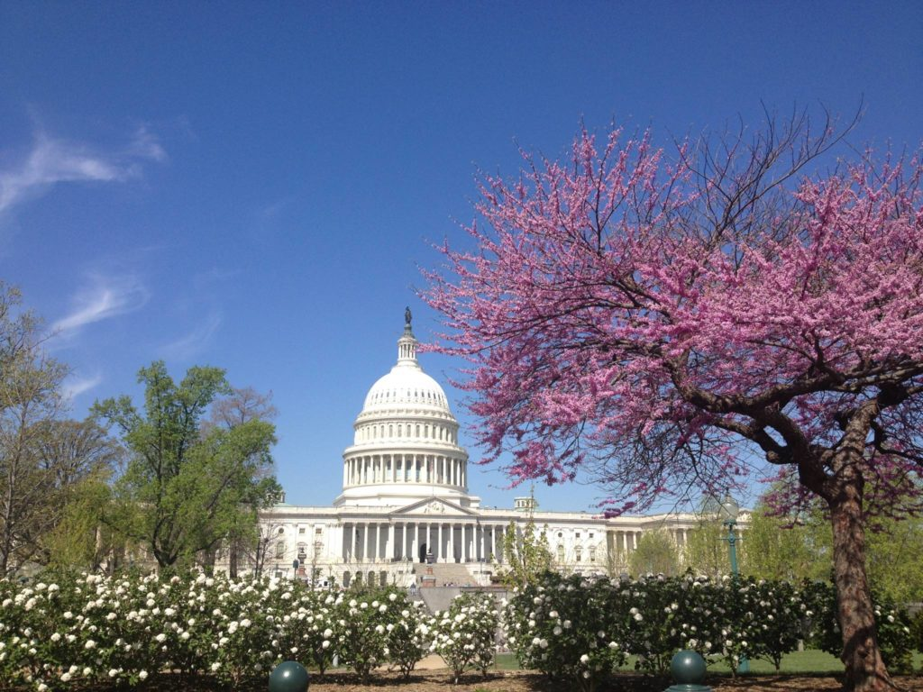 Washington DC, Cherry Blossom Festival